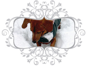 The best selling quality dog coats original design 1998